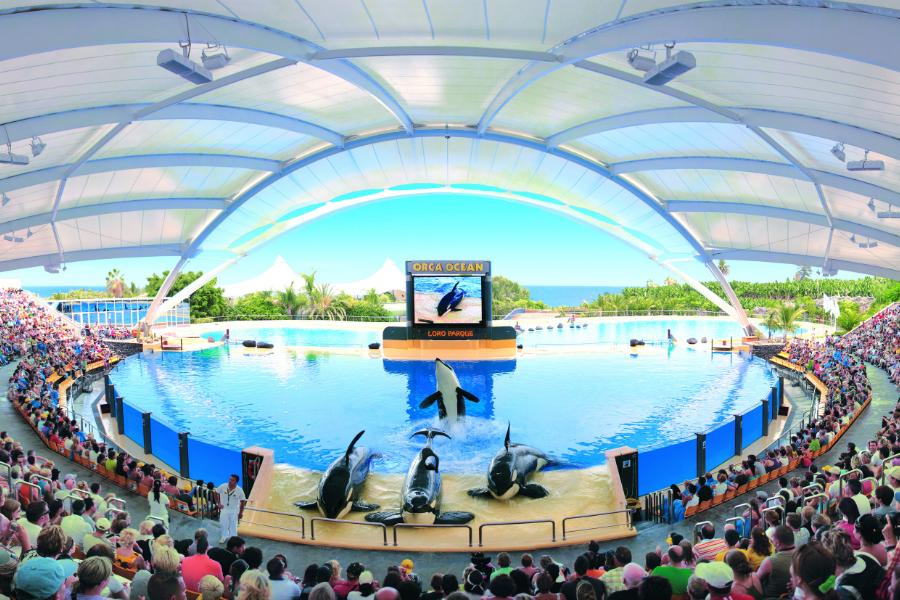 Best Tenerife Theme Parks: Siam Park, Loro Parque y más